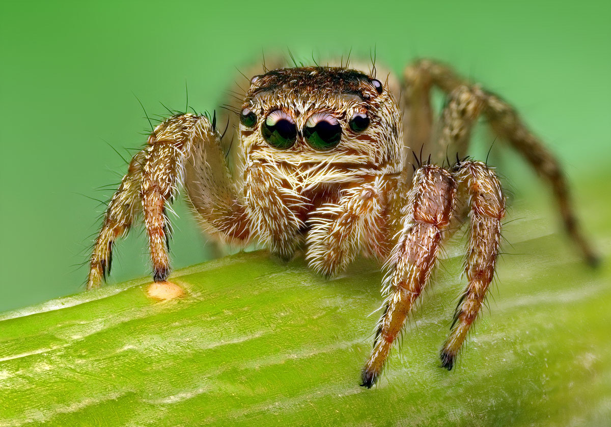 пауки фото все виды и названия