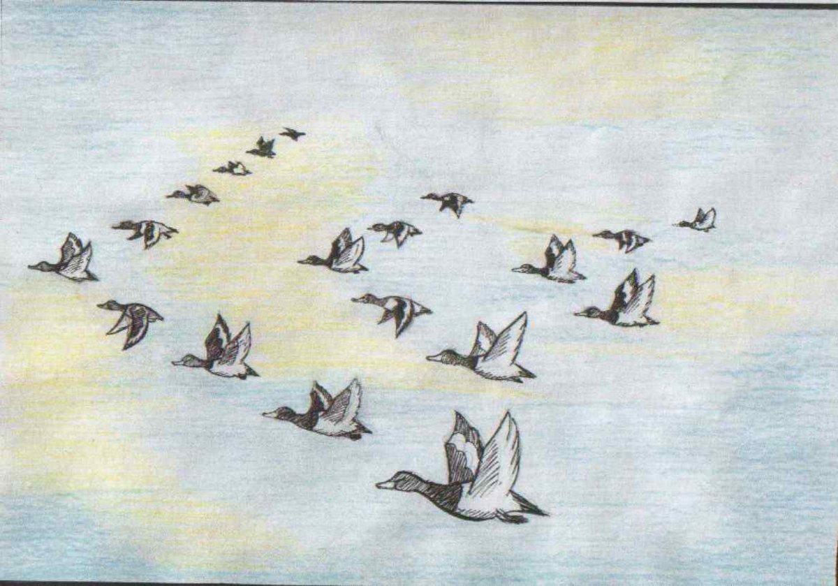 Картинки птицы улетают на юг осенью рисованные, днем рождения