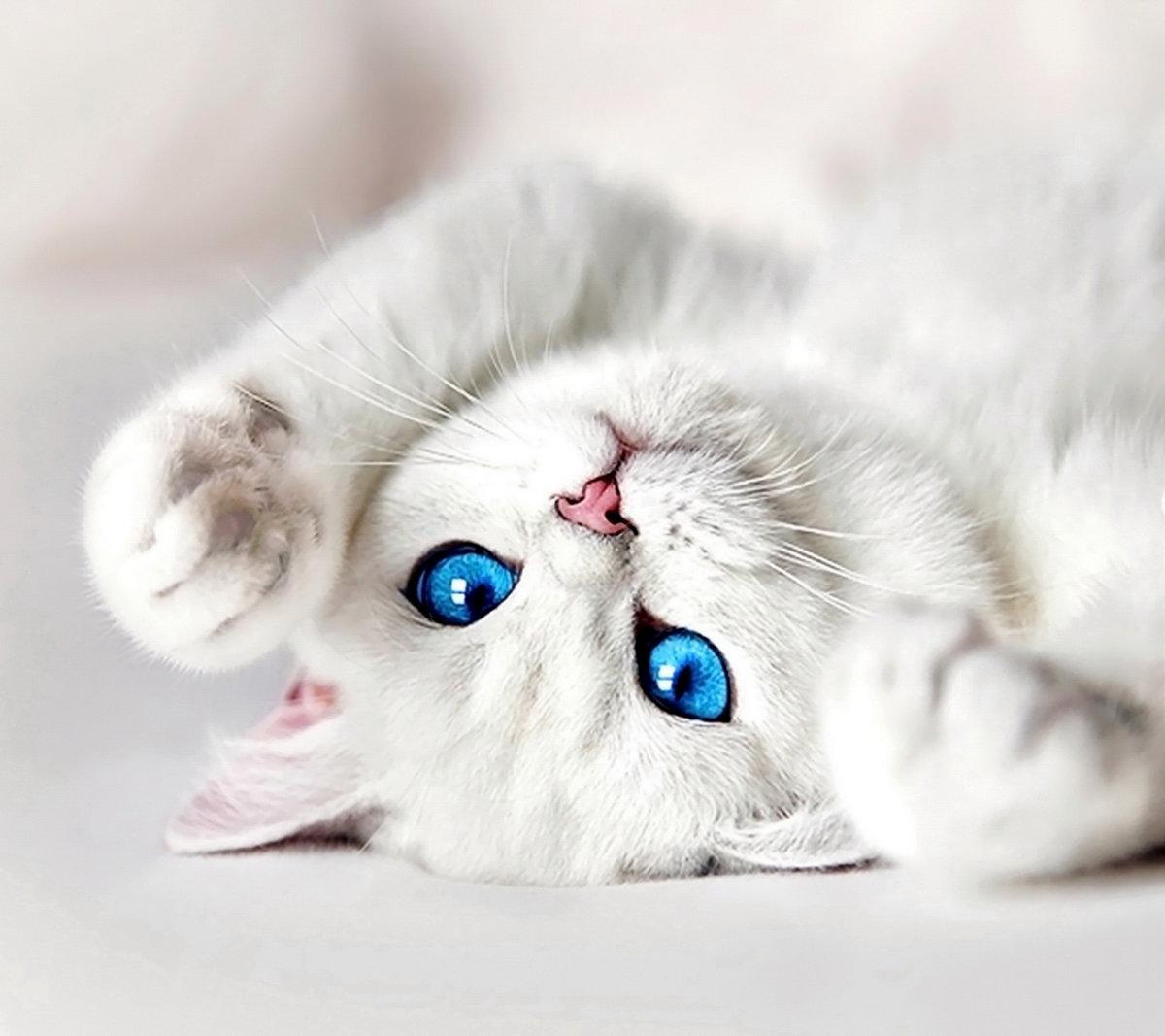 Фото для, кот скучает открытка