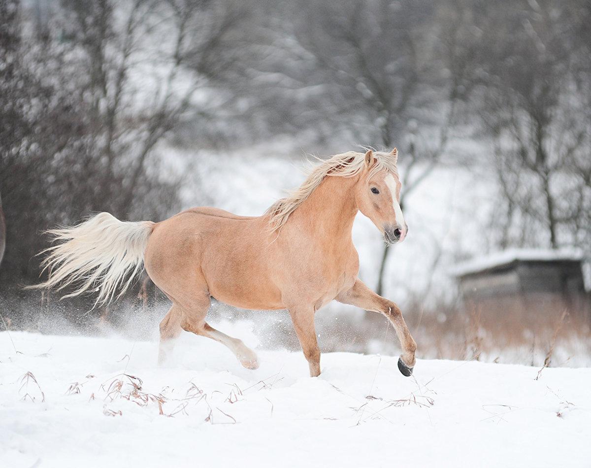 Лошади поражают своей невероятной выносливость и красотой.