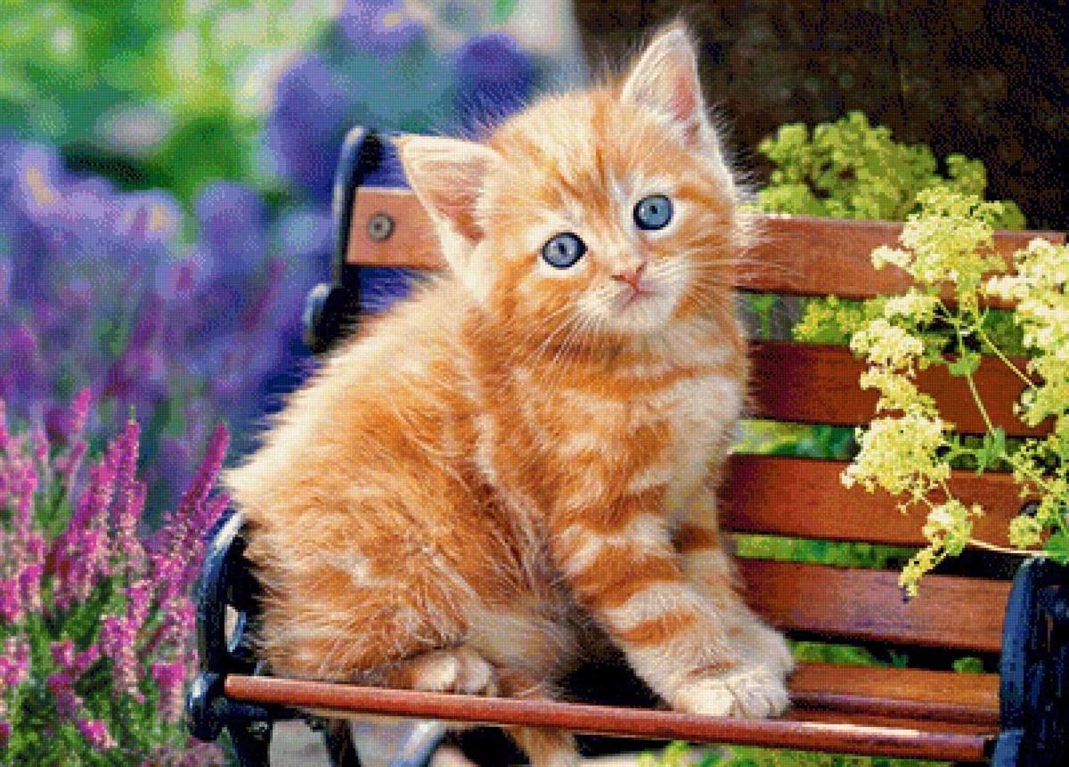 Рыжий котенок картинки фото, здорово