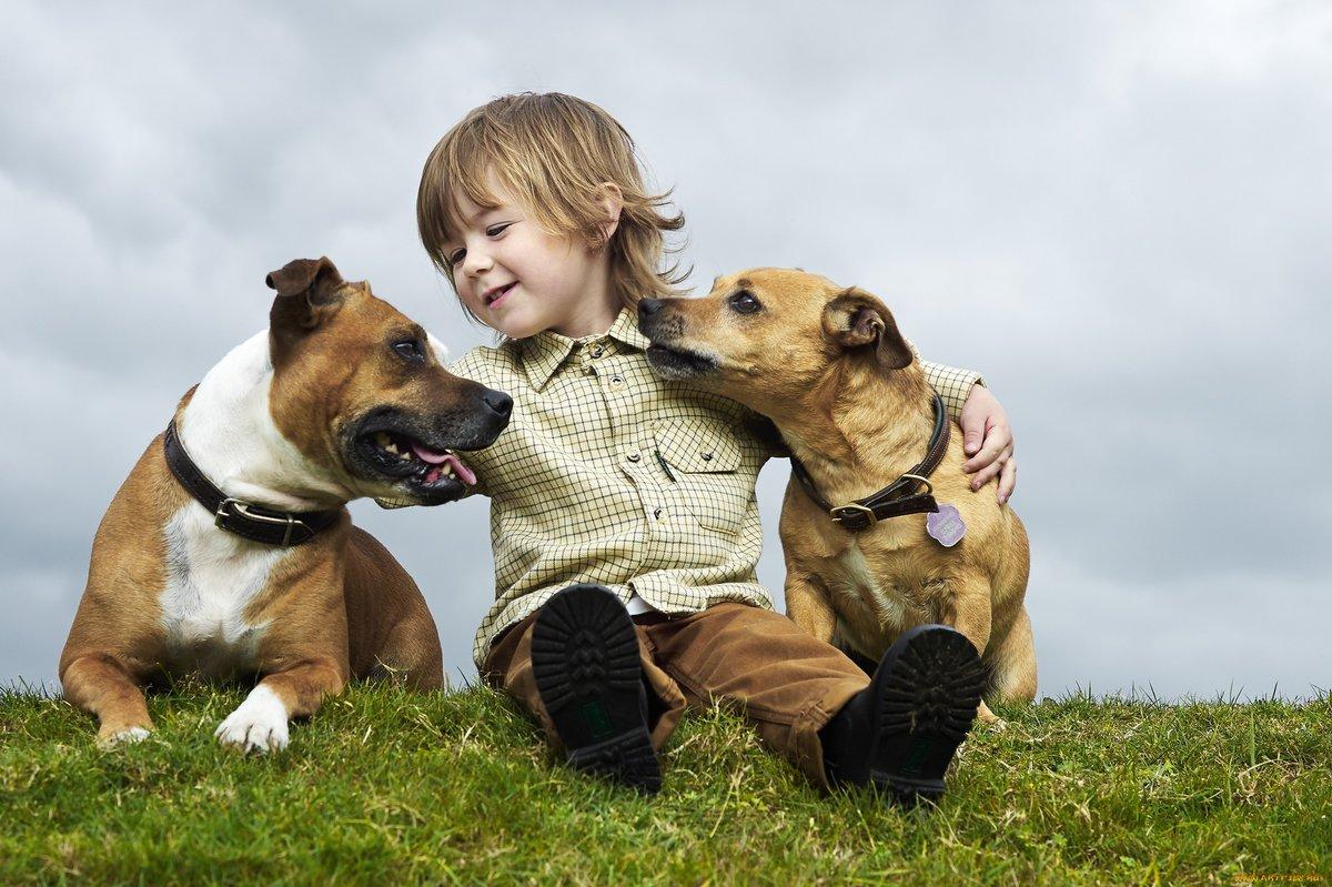 Собака друг человека в картинках, для открытки картинки
