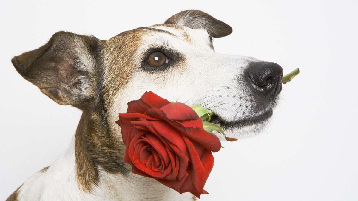 Месяцев девочка, открытка собачка с цветочком
