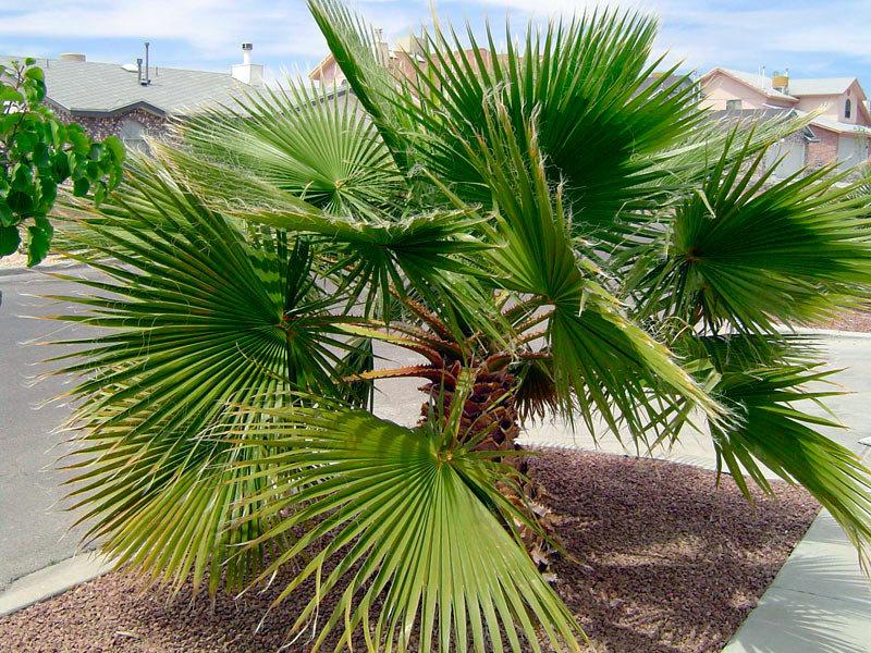 маленькой травянистые пальмы виды фото святослава любит армия