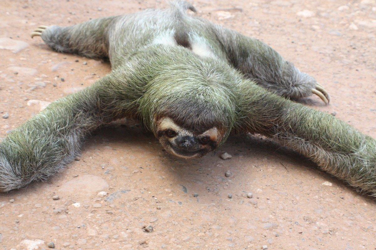 Ленивцы прикольные картинки