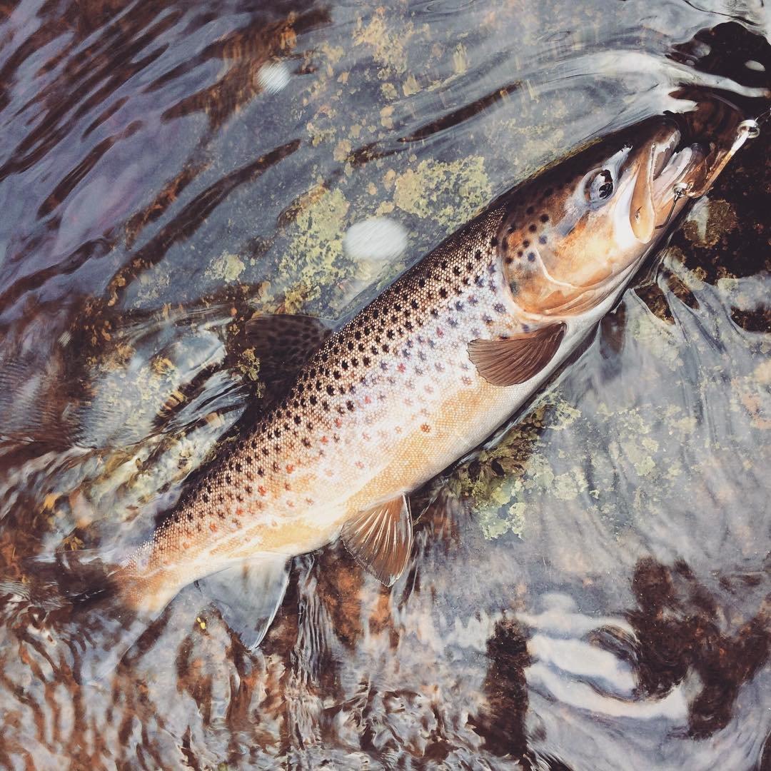 аттрактант fish hungry форум