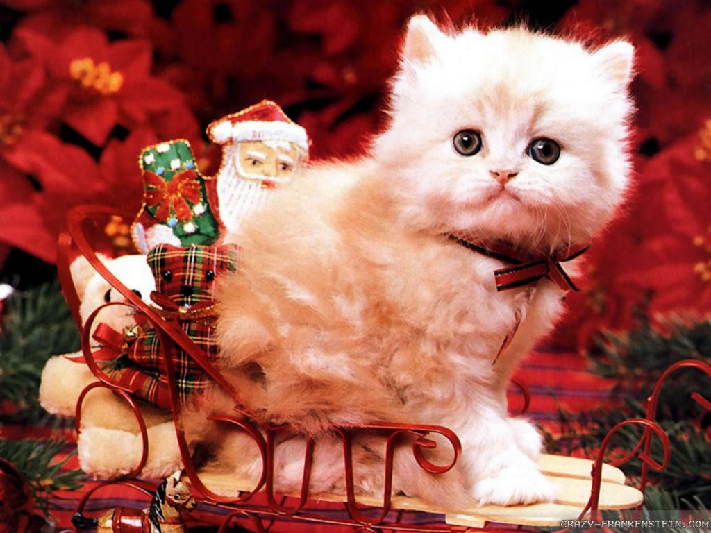часу картинки с новогодними котятами утро блюда