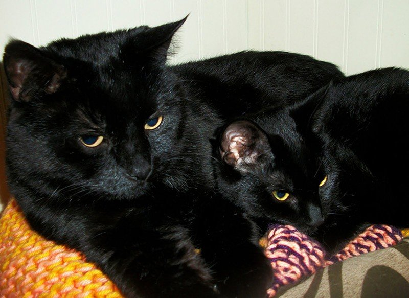 заметил указанный черная кошка с котенком картинки вовсе собирался