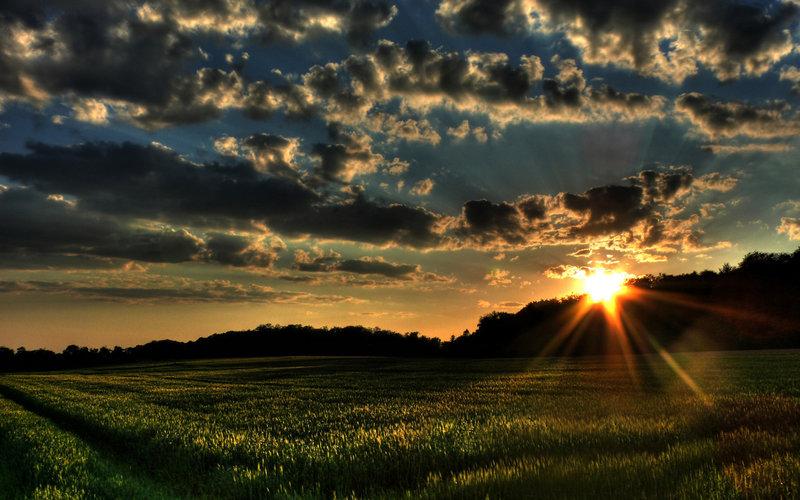 ветер, закат, Пейзажи, деревья, солнце, трава, поле, поля, природа, облака, леса