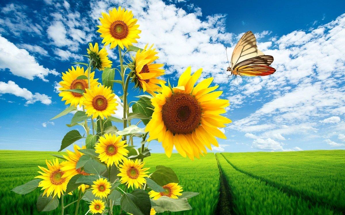 Открытка на тему лето, дню мудрости доброты