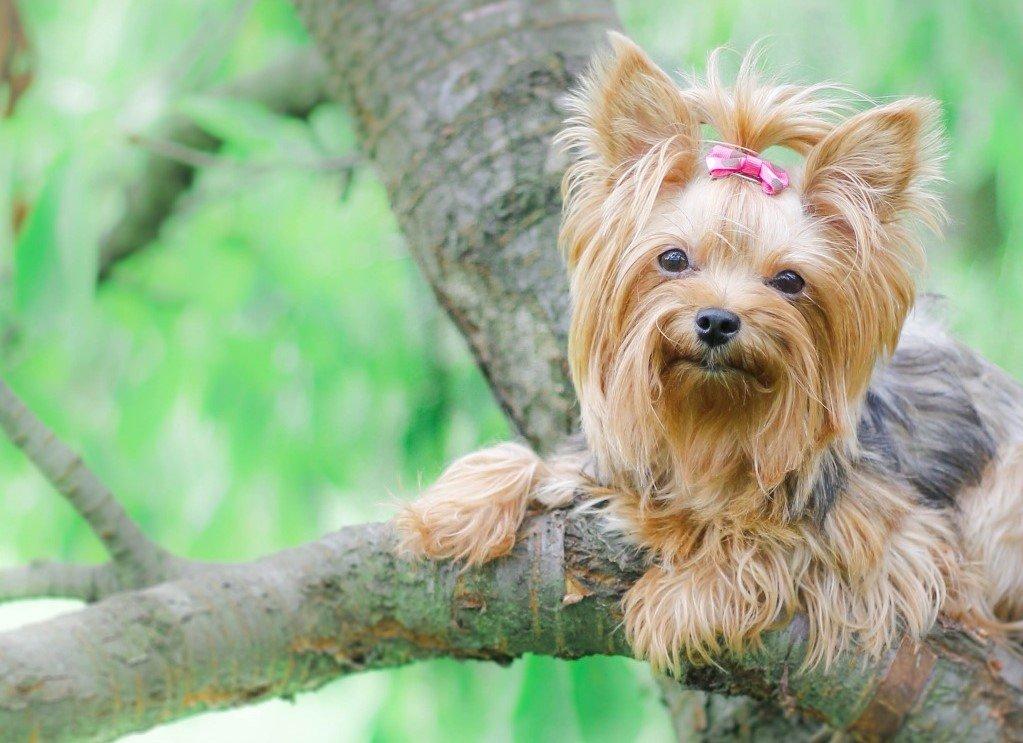 Йорк сидит на дереве