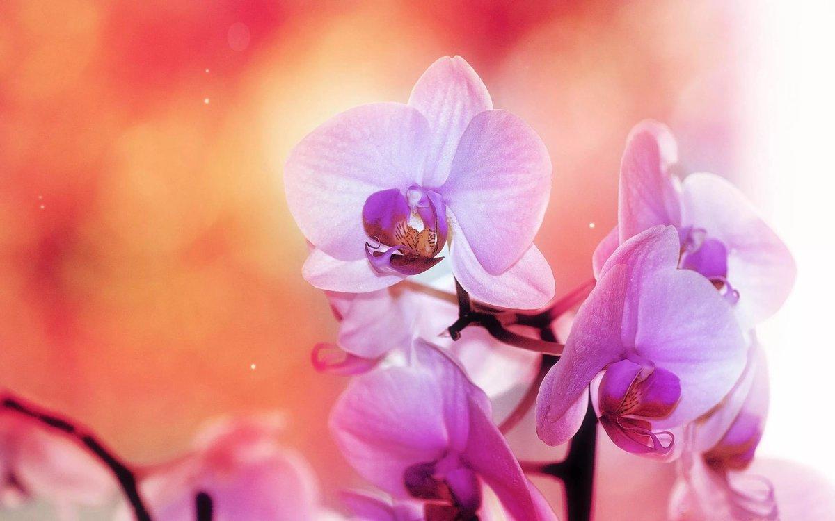 Картинки с орхидеей на рабочий стол