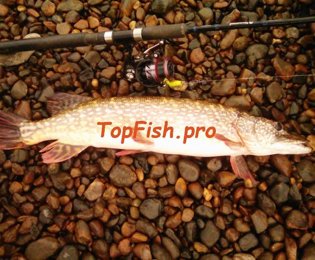 fishhungry купить отзывы