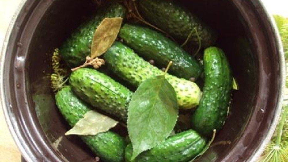 Рецепт быстрого приготовления малосольных огурцов в кастрюле.