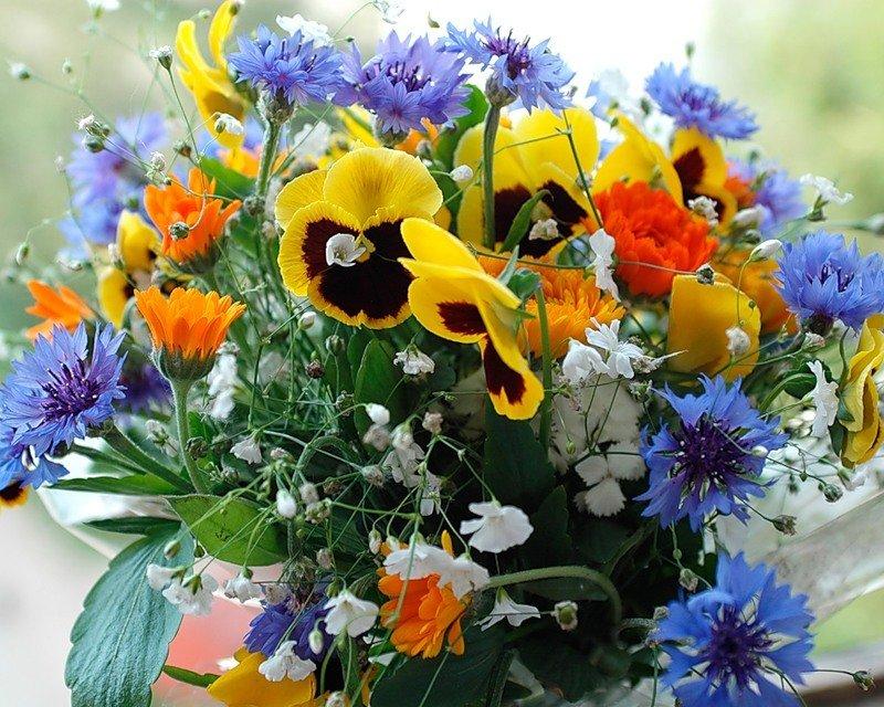 Птицы, открытки с букетами полевых цветов красивые