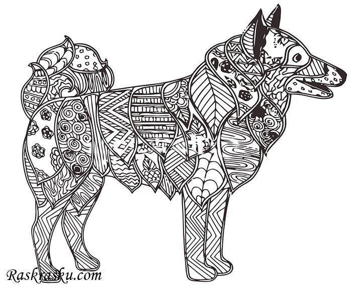 «Раскраска Собака хаски» — карточка пользователя ...
