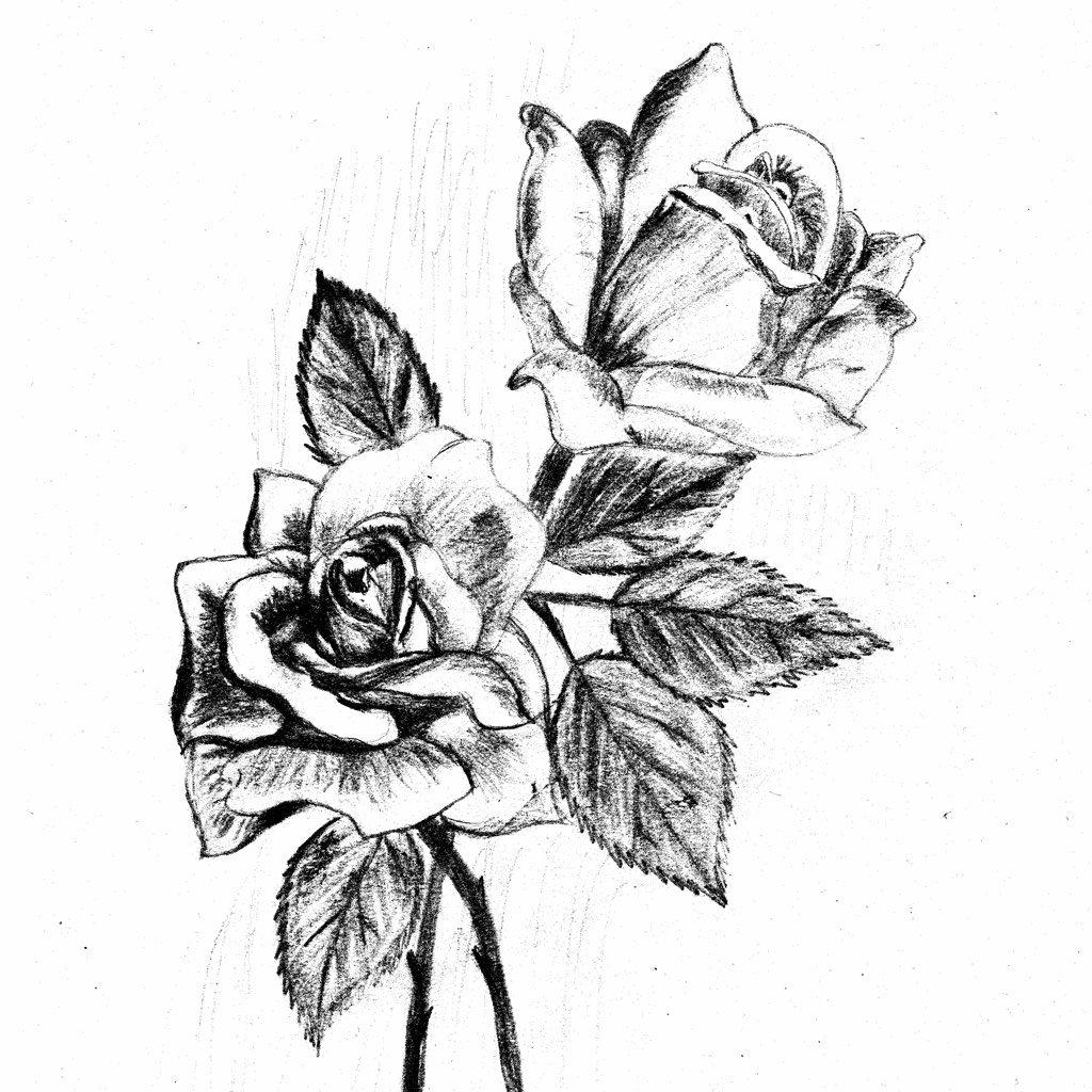 Картинка роза в графике