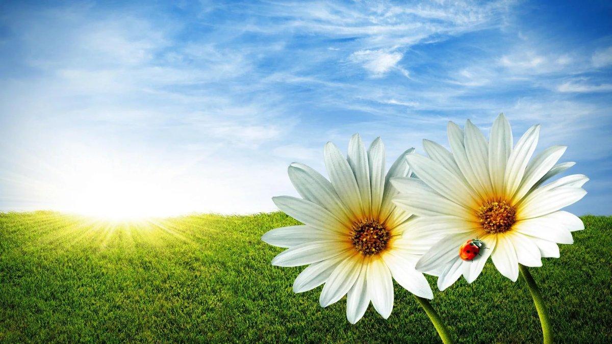 Картинки цветы на фоне неба, поздравления