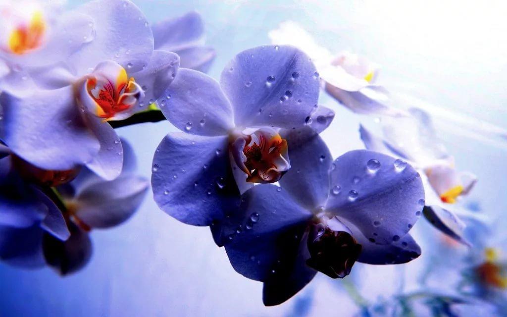 фото цветы обои на рабочий стол орхидеи сказать, что
