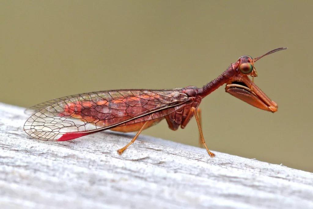 насекомые австралии фото с названиями