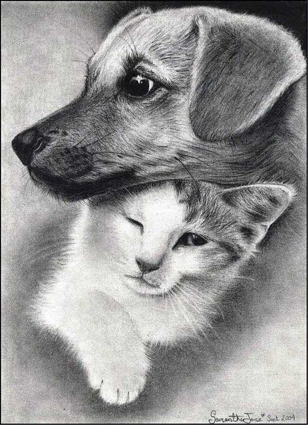 Собаки и кошки картинки для срисовки
