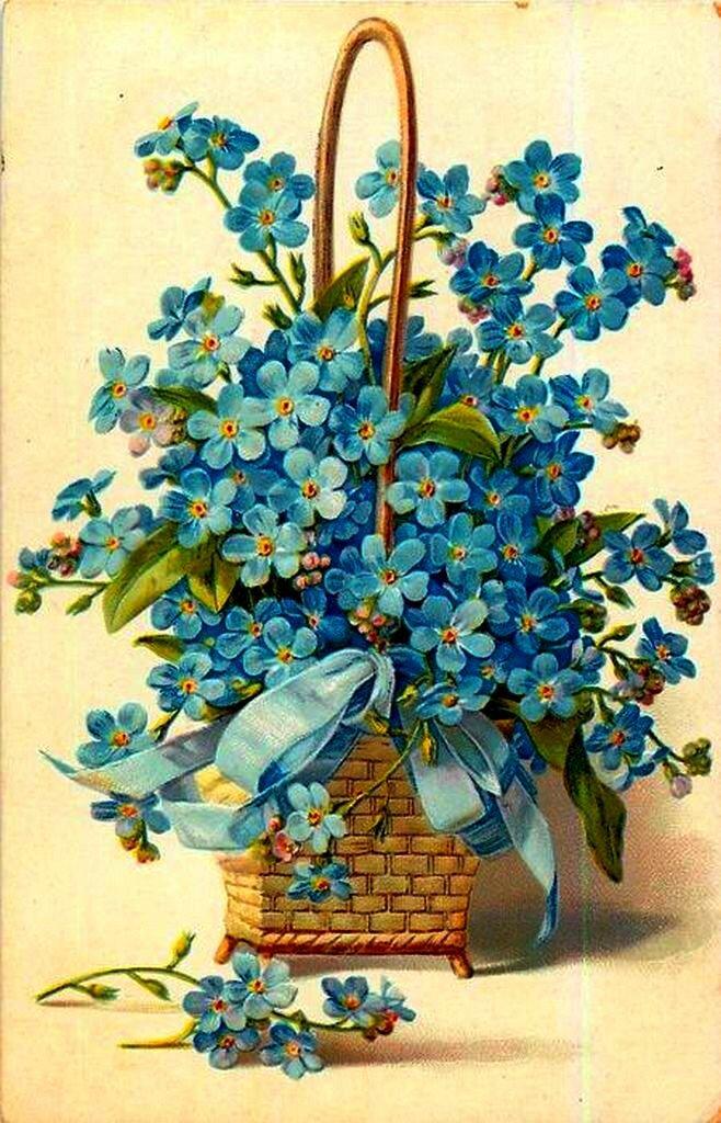 Открытки, открытка цветы незабудки