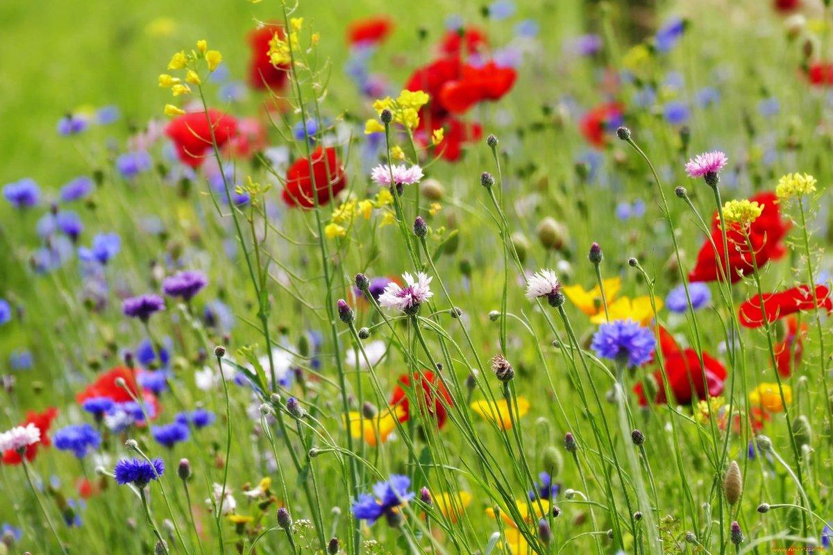 Прикольные картинки, картинки лето полевые цветы
