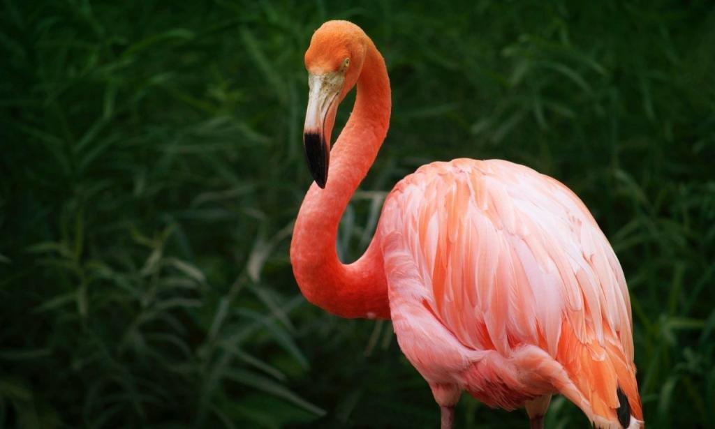 печать сургуте картинки про фламинго понять, что так