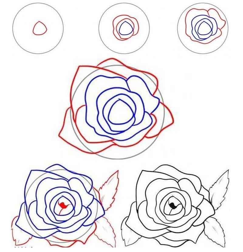 легкие рисунки роза по порядку стараемся