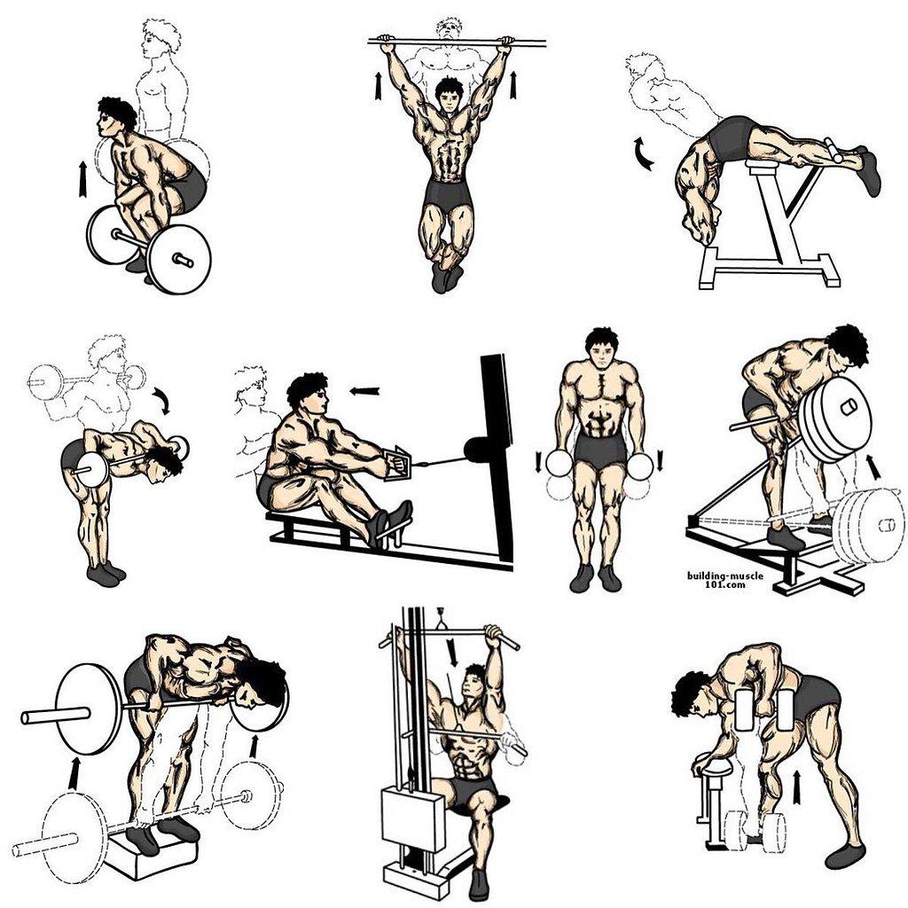 Комплекс упражнений в картинках на мышцы