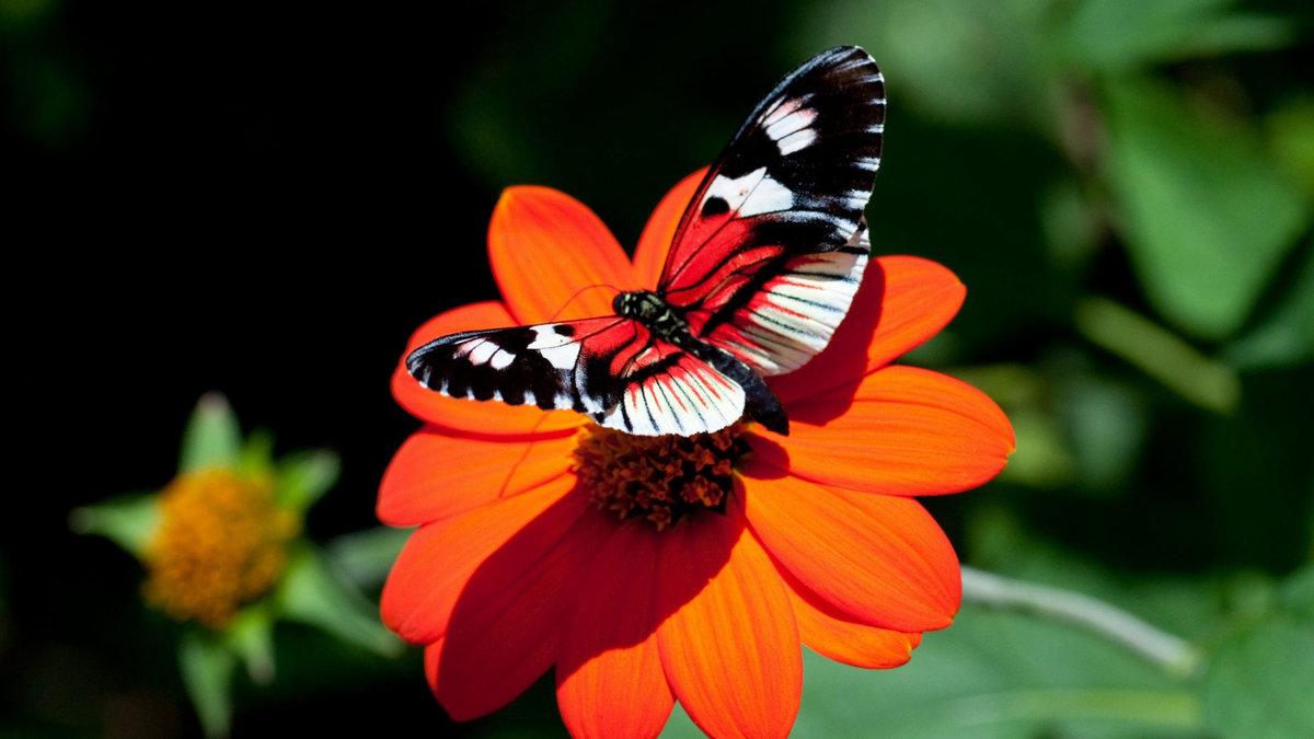 Открытка «Бабочка на цветке» » Сделай сам 24
