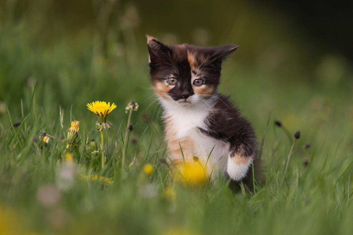 Картинки с котятами на природе