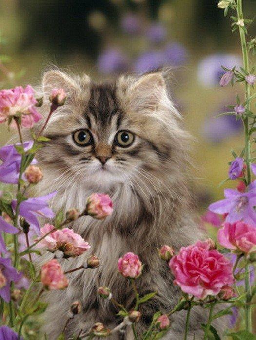 владивостоке вдруг картинки котята и цветы даже легенда том