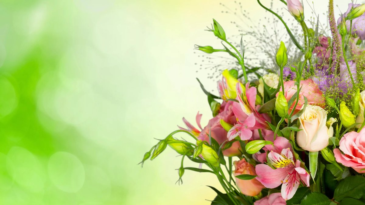 Февраля гвоздиками, красивая открытка с цветами без надписи