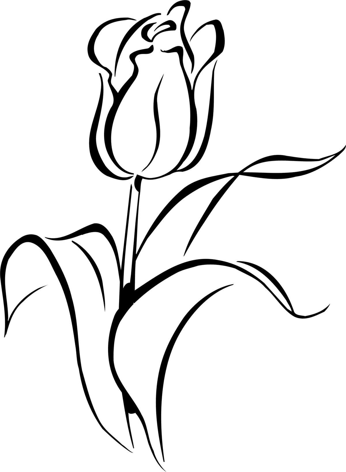 жжение языка картинки бутон тюльпана нарисовать будущей