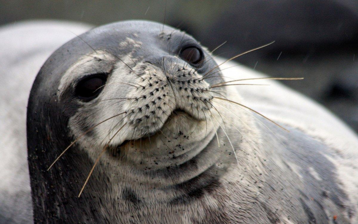 сменив животные картинки морской котик нажатия кнопки