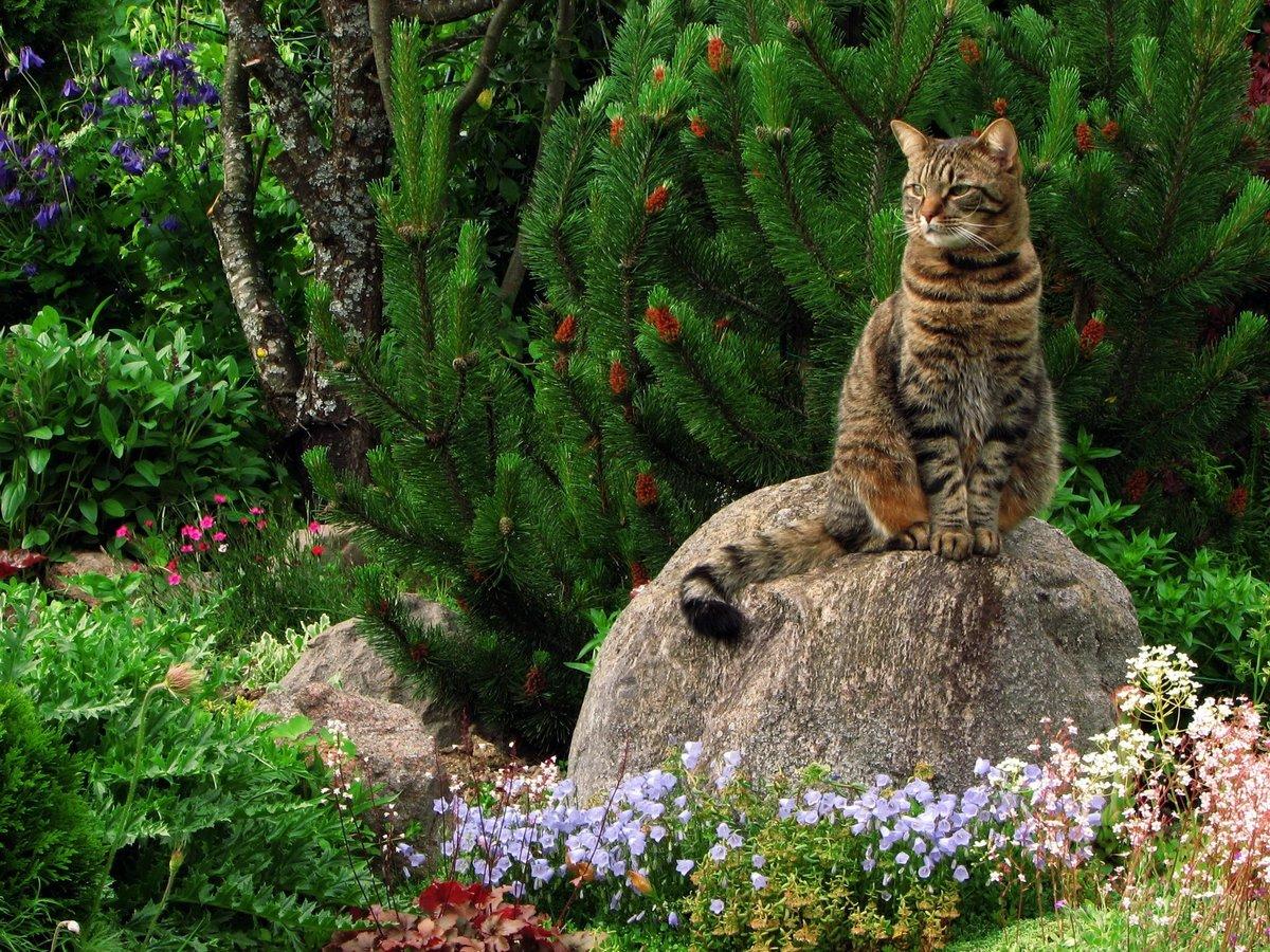 Яндекс картинки с кошками природа