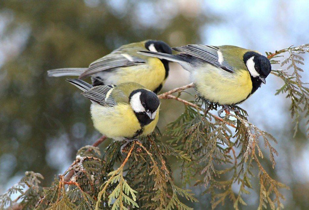 Птицы картинки на день птиц