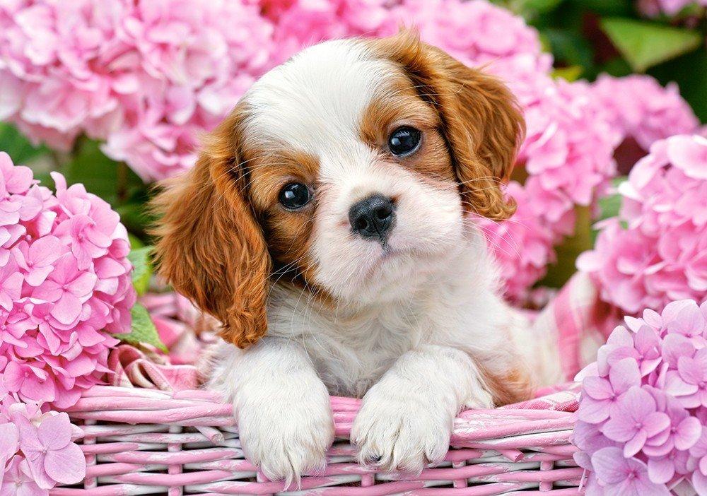 Собачки в открытках, лет свадьбе картинки