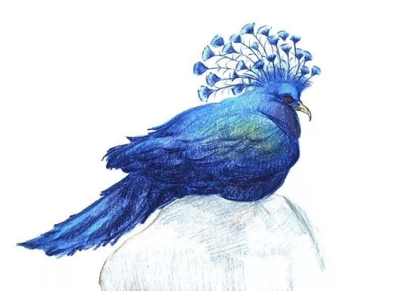 Синяя птица картинки для детей