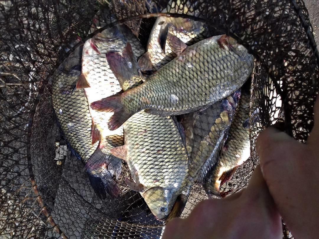 fishhungry активатор клева купить в воронеже