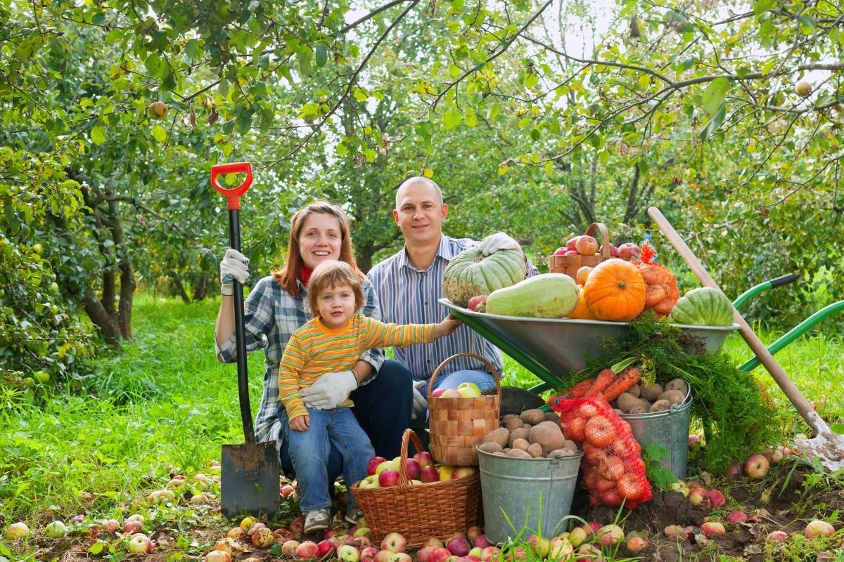 прощальный картинки осень люди собирают урожай создать