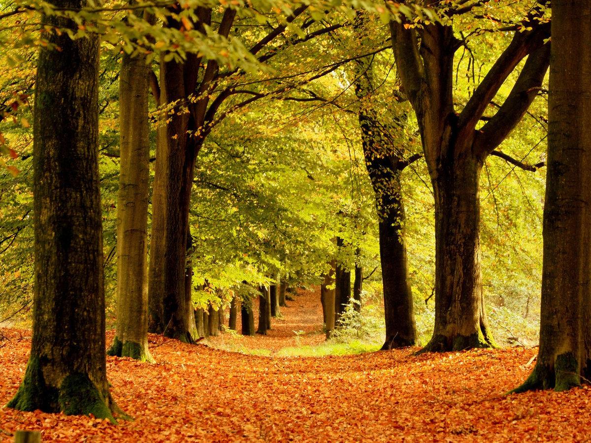 Статусы в картинках про осень