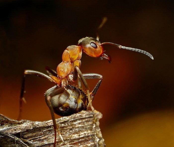 Фоток вебке фото муравья крупным планом киси