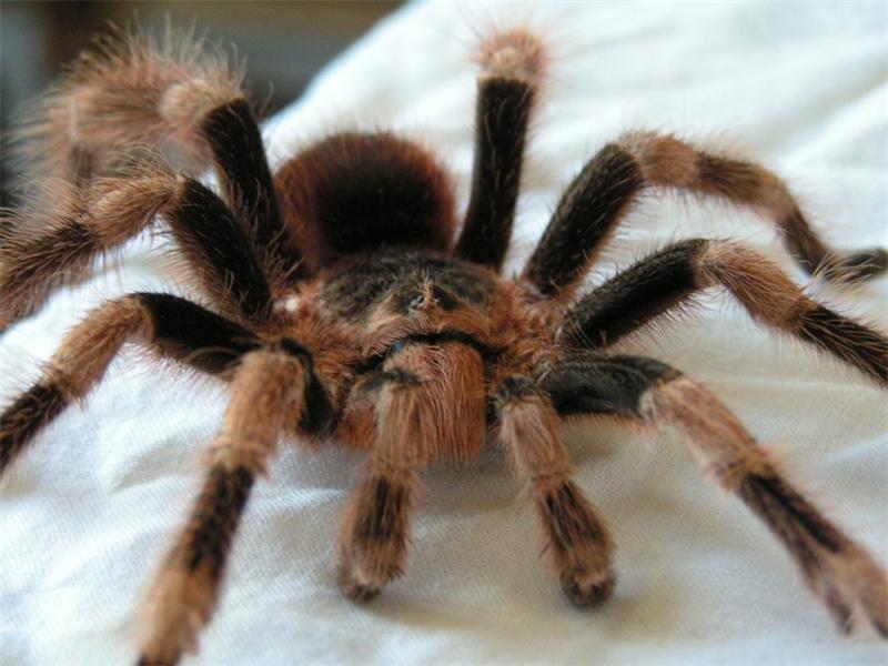 картинки самава большова паука девушки уверены, что
