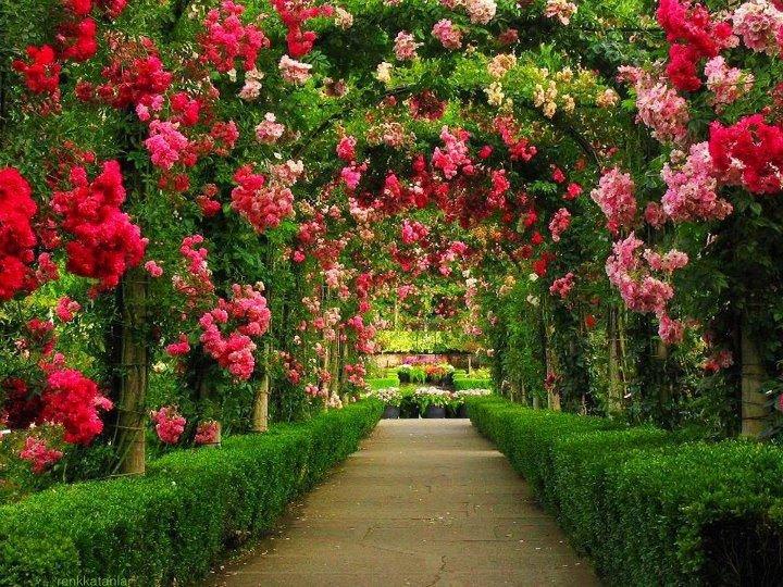 Rose Flower Garden Hd Wallpaper Scenic On Garden Also Beautiful