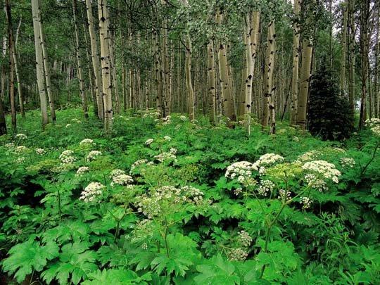 Летом в лесу.