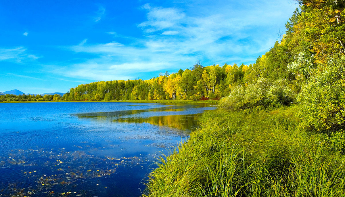 Природа Норвегии фото видео описание животного и