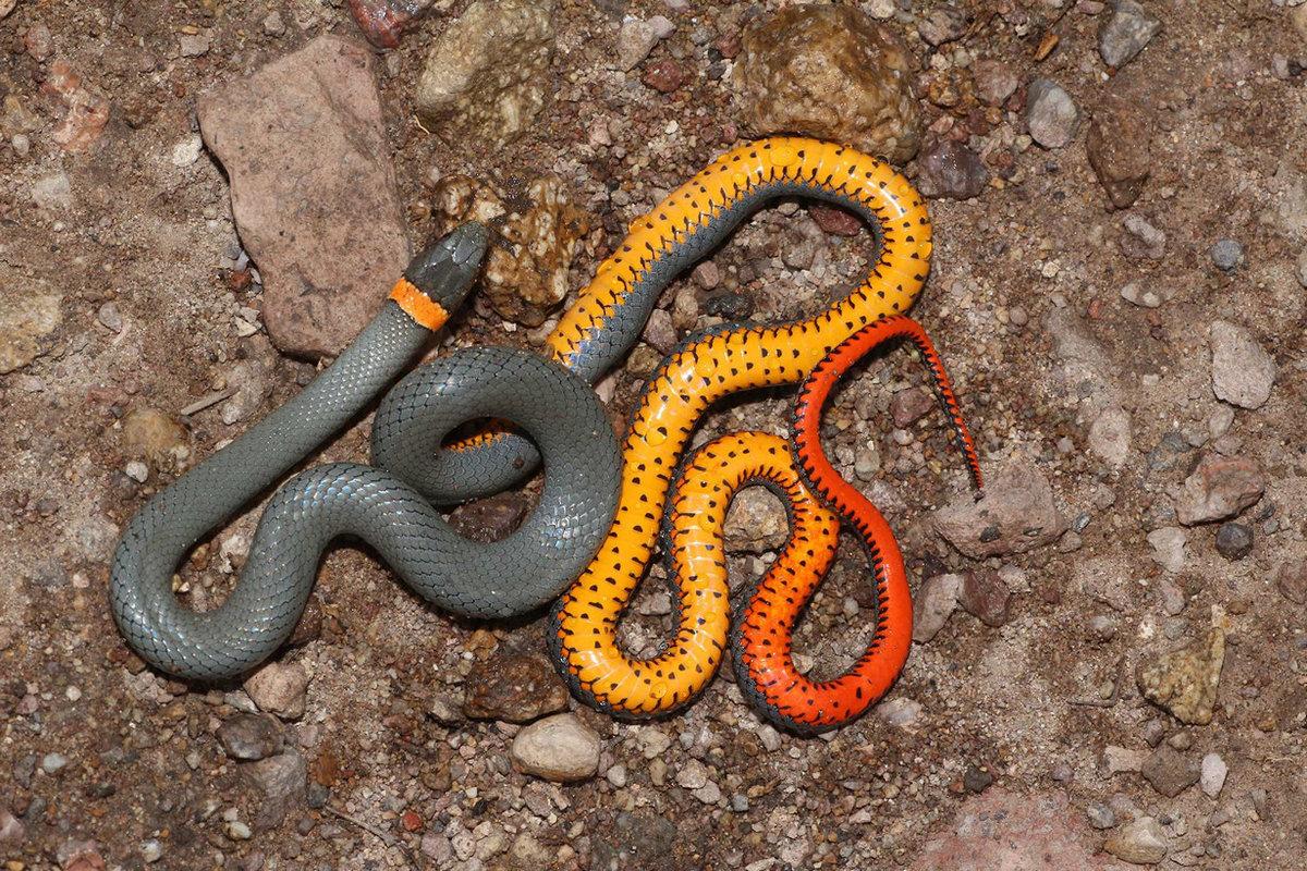 тогда минниханов все виды змей мира фото и названия обнаружен