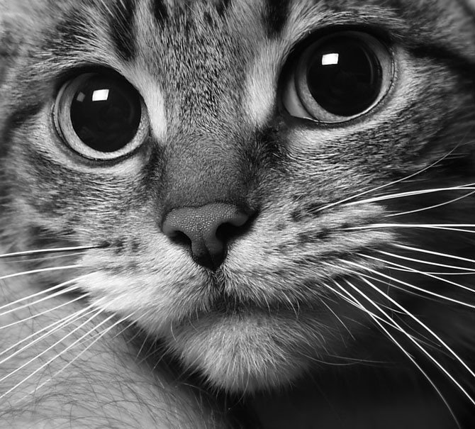 Кот картинки для аватарки